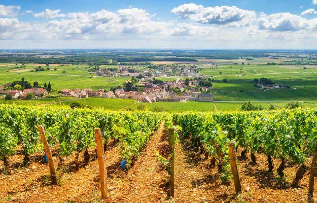 Bordeaux, BORGOGNA, CHAMPAGNE, FRANCIA, vino, Mondo