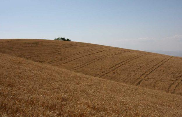 AGROFARMACI, BONIFICHE FERRARESI, CAI, CONSORZI AGRARI, SEMENTI, Non Solo Vino