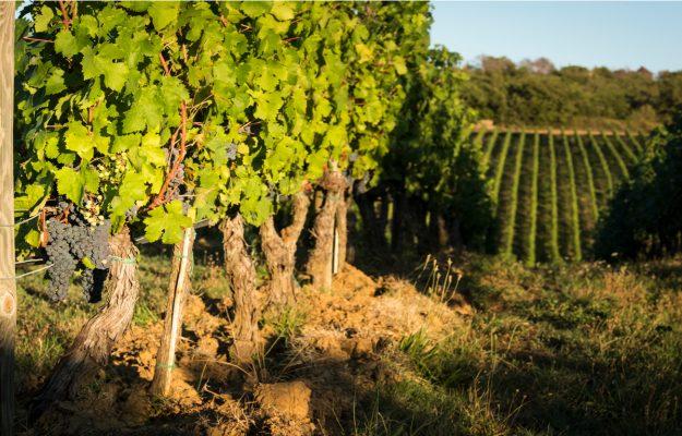 AMERICAN ASSOCIATION OF WINE ECONOMICS, PRODUZIONE, SUOLO, vino, Mondo