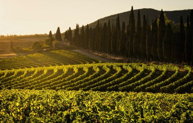 CAP, EFOW, EU, vineyard-planting rights, VINEYARDS, WINE, News