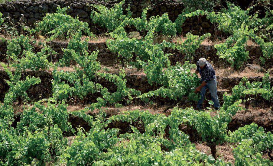 CONSAPEVOLEZZA, ETNA, SICILIA, Su i Quaderni di WineNews