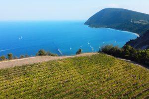 Da Raffaello al Leopardi, dal Verdicchio al Rosso Conero, viaggio nelle Marche del vino