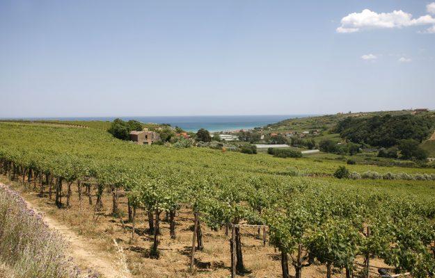 BERTANI, DONNAFUGATA, IL POGGIONE, ITALIA, MUNDUS VINI, PREMI, ROCCA DELLE MACÌE, TOLLO, vino, Mondo
