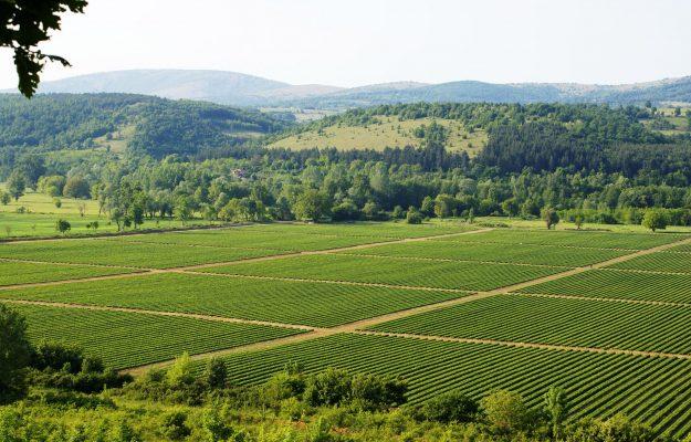 AGRICOLTURA, BIOLOGICO, Coldiretti, ITALIA, SANA RESTART, SINAB, Non Solo Vino
