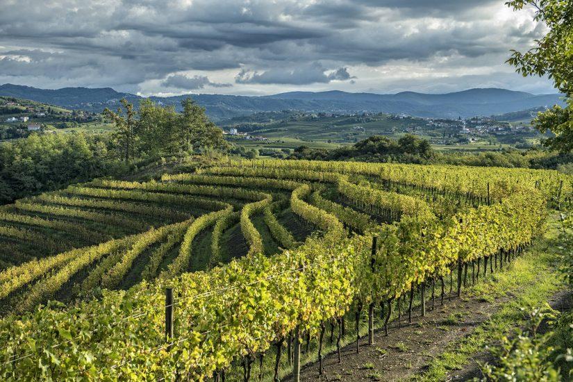 CARATTERISTICHE CLIMATICHE E OROGEOGRAFICHE, COLLIO BIANCHISTA, SUCCESSO INTERNAZIONALE, Su i Quaderni di WineNews