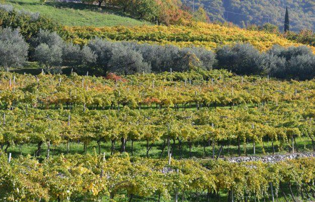 FILIERE, LORENZO TERSI, LT WINE & FOOD ADVISORY, MERCATI, PANDEMIA, Italia