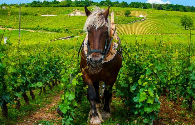 BRUXELLES, CORRIERE VINICOLO, FEDERVINI, FILIERA, FIVI, UIV, UNIONE ITALIANA VINI, vino, VINO NATURALE, Mondo
