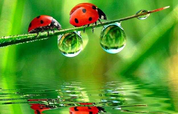 AGRICOLTURA, BILANCIO, BIOLOGICO, FEDERBIO, GOVERNO, MADE IN ITALY, SOSTENIBILITA, WWF, Non Solo Vino