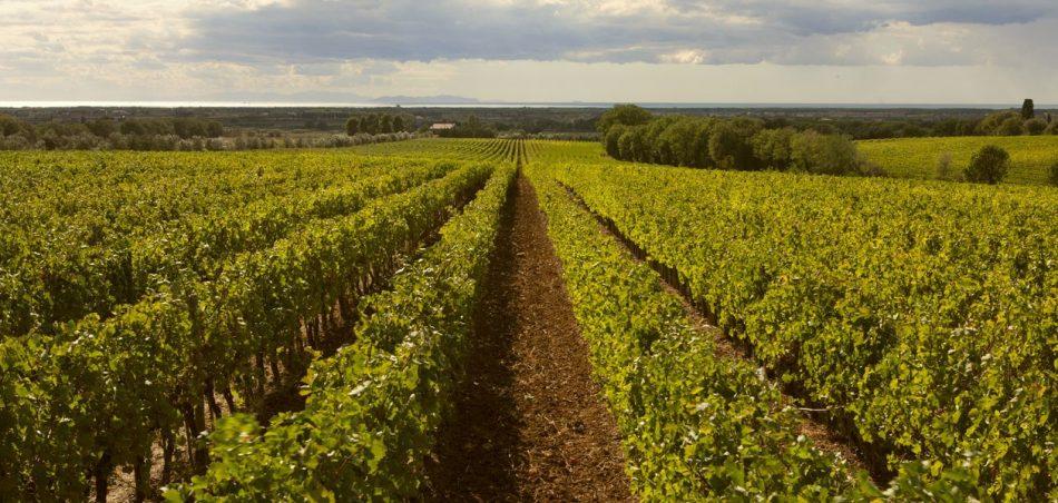 BOLGHERI, FAMIGLIA DELLA GHERARDESCA, ORIGINI ENOICHE, RUOLO DELLE DONNE, Su i Quaderni di WineNews