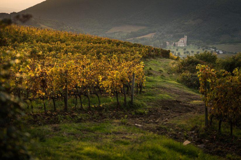 BANFI, BIONDI SANTI, MONTALCINO, QUOTAZIONI, SOLDERA, Su i Quaderni di WineNews