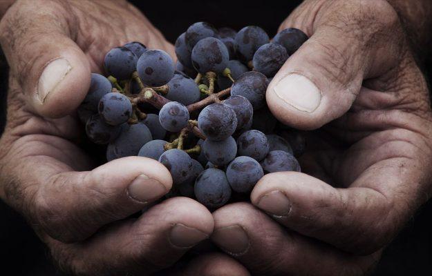 CHIOCCIOLE, GUIDA SLOW WINE, SLOW WINE, TOP WINE, Italia