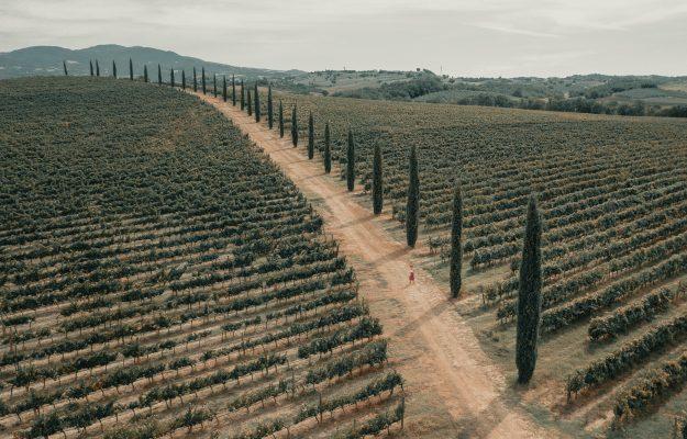 ITALIA, MINISTERO DELLE POLITICHE AGRICOLE, SOSTENIBILITA, vino, Italia