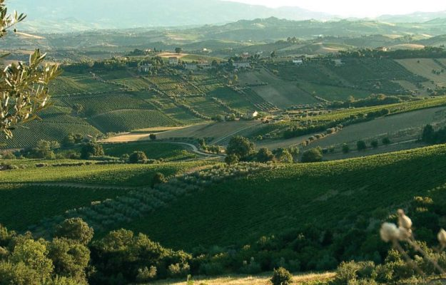 FOOD, INVESTMENTS, MARCHE, MONCARO, WINE, News