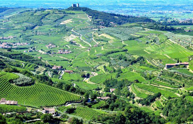 CONSORZIO DELLA VALPOLICELLA, EXPORT, MERCATO, TERRITORIO, VALPOLICELLA, VALPOLICELLA ANNUAL CONFERENCE, vino, Italia