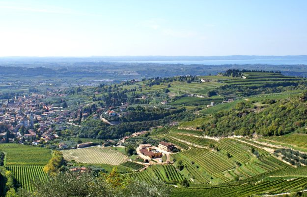 CONSORZIO VALPOLICELLA, EXPORT, ITALIA, NOMISMA WINE MONITOR, VALPOLICELLA, VALPOLICELLA ANNUAL CONFERENCE, vino, Italia