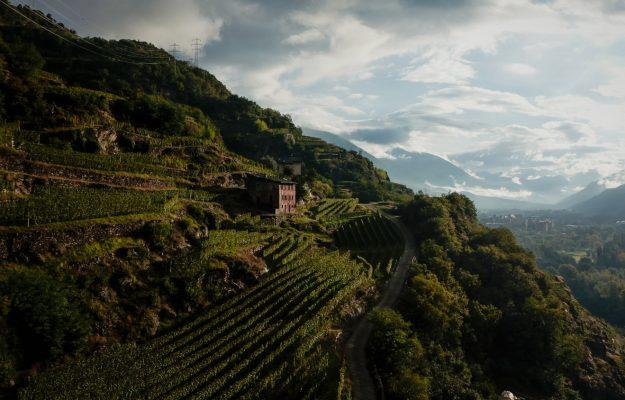 AMBROSETTI, FOOD & BEVERAGE, FORUM AMBROSETTI, THE EUROPEAN HOUSE, Non Solo Vino
