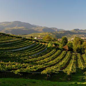 Valpolicella Superiore, il vino su cui puntare per il 93% dei produttori della Valpolicella