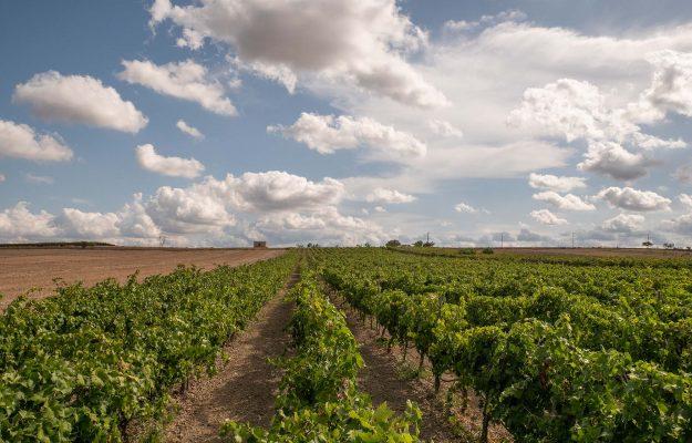 APULIA, consortia, Environment, photovoltaic, WINE, wine territories, News