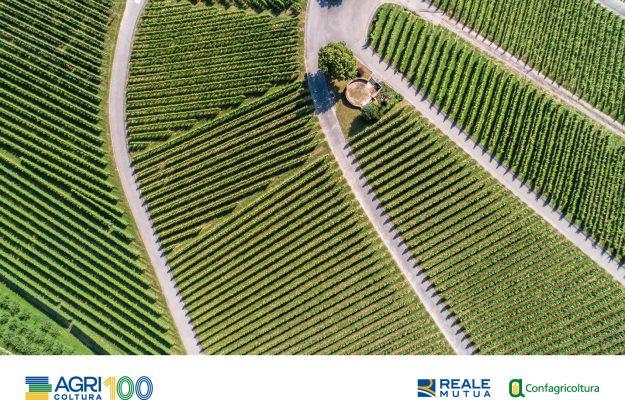 AGRICOLTURA100, BARBERANI, CERVED, Confagricoltura, REALE MUTUA, SOSTENIBILITA, vino, Italia