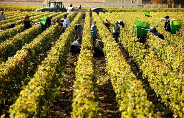 Bordeaux, TERRITORI, VALERIE MURAT, vino, Mondo