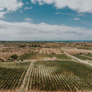 """Nel Salento, la """"Wine Share Economy"""" di Tenuta Liliana: vigna e distribuzione condivisa"""