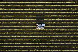 Da Fao a Coop Italia (e non solo), tra diritto al cibo e agricoltura, la parole della sostenibilità
