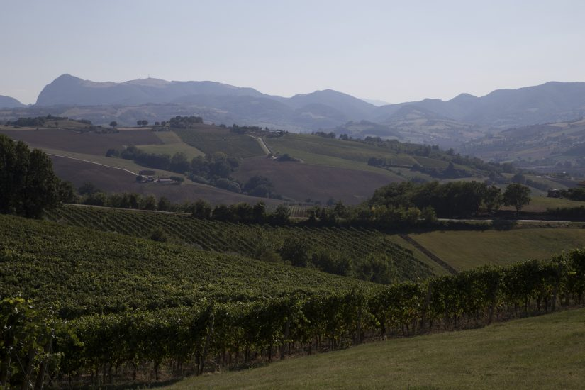 CASTELLI DI JESI, VERDICCHIO, Su i Quaderni di WineNews