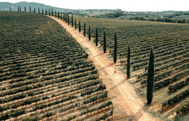 ANTEPRIME DI TOSCANA, BUY WINE, STEFANIA SACCARDI, TUSCANY, WINE, News