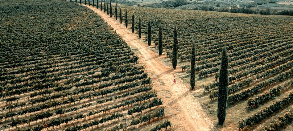 """La Toscana del vino sotto i riflettori: da """"Buy Wine"""" alla settimana delle """"Anteprime"""""""