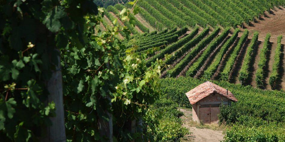 CONSORZIO BARBERA D'ASTI E VINI DEL MONFERRATO, NUMERI, RIPRESA, Su i Quaderni di WineNews