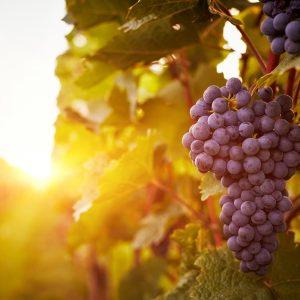 Come cambiano le gradazioni alcoliche dei vini tra global warming e dinamiche di mercato