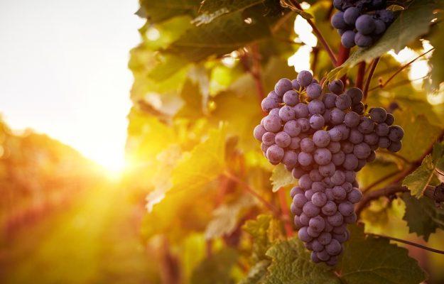 Bordeaux, BORGOGNA, CALIFORNIA, GLOBAL WARMING, GRADO ALCOLICO, LIV-EX, MERCATO, PIEMONTE, TOSCANA, vino, Mondo