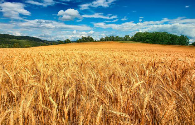AGRICOLTURA, L'ABBATE, MICROCREDITO, MINISTERO DELLE POLITICHE AGRICOLE, SOSTEGNI, SOTTOSEGRETARIO, Non Solo Vino