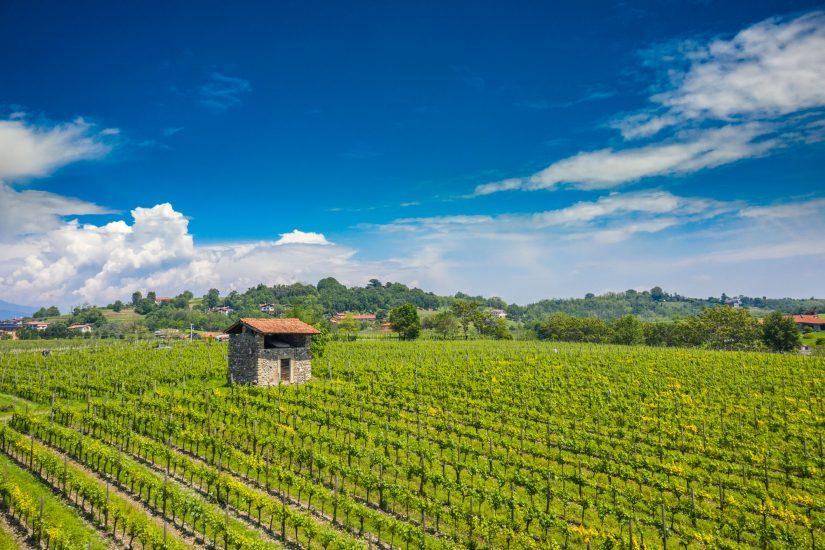 CAMBIAMENTO CLIMATICO, ERBAMAT, VITIGNO STORICO, Su i Quaderni di WineNews