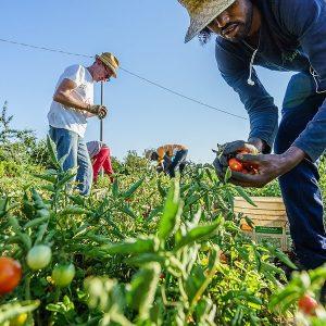 Dal Governo semaforo verde contro le speculazioni sul cibo: è una svolta storica per gli agricoltori