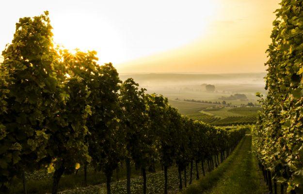 CIA AGRICOLTORI ITALIANI, FORUM NAZIONALE VITIVINICOLO, UNIONE ITALIANA VINI, vino, Italia
