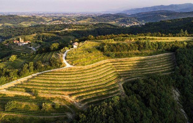 Coldiretti, CONSUMI, EXPORT, FATTURATO, vino, Italia