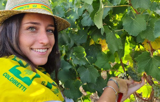 Coldiretti, ETTORE PRANDINI, EXPORT, grape, HARVEST, WINE, News