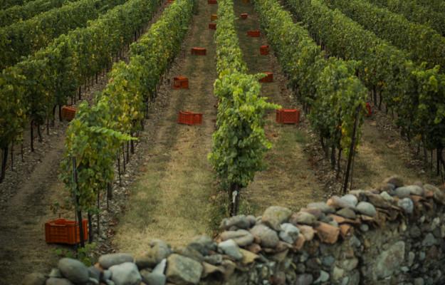 FRANCIACORTA, HARVEST, territories, WINE, News