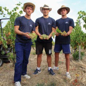 Quando il vino è inclusione: studenti e detenuti vendemmiano insieme nelle vigne di Torrevilla