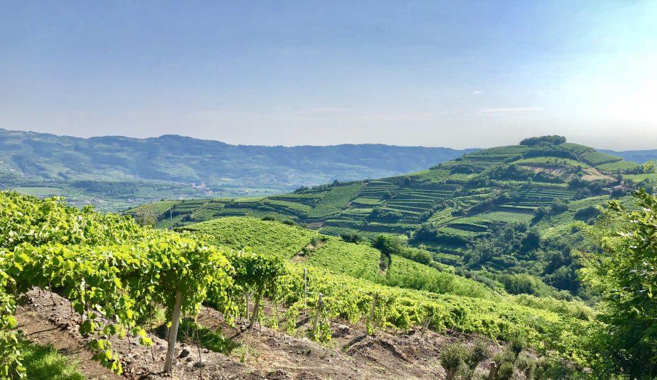 AMBIENTE, FAO, NUMERI, OBIETTIVI, SOAVE, Su i Quaderni di WineNews