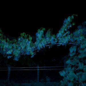 """Zenato ed il """"Vino. Oltre il paesaggio"""". La nuova mostra fotografica nel progetto Zenato Academy"""