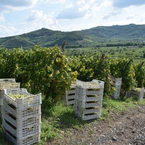 Il mondo del vino si schiera per la Val d'Alpone patrimonio Unesco: l'idea di Gianni Tessari