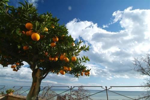Alberi da frutto tipici siciliani, attraverso la realizzazione di