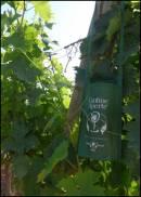Ecco Cantine Aperte, l�enoturismo made in Italy, il 28 e 29 maggio