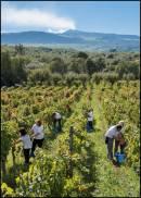 Vendemmia: clima e meteo sono variabili fondamentali, capaci di regalare quella diversità che, da sempre, lega vino e terra