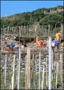 Uno stage dei giovani sui muretti a secco della Valtellina