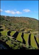 I vigneti di Pantelleria