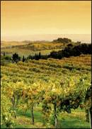 La Toscana del vino verso il record delle esportazioni, a 923 milioni di euro nel 2015
