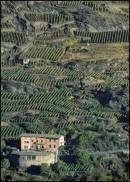 I terrazzamenti della Valtellina